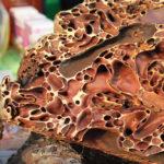 Sarang Semut Papua, Berbagai Penelitian & Kandungannya